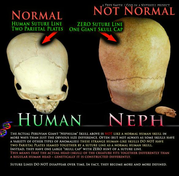 nephilim-skull-vs-human-skull